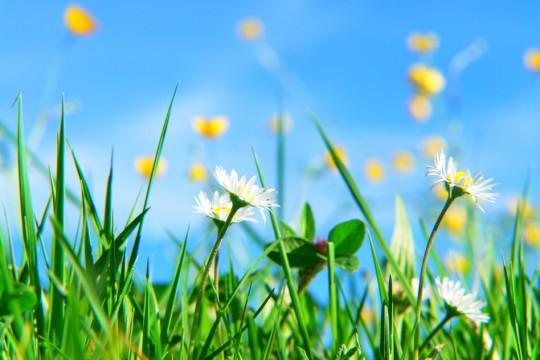 photodune-827925-spring-s.jpg