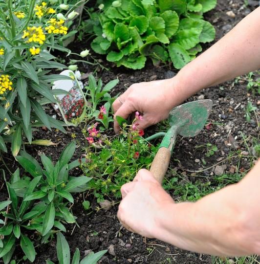 photodune-4439652-gardening-s.jpg